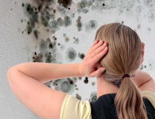Mold Removal vs. Remediation
